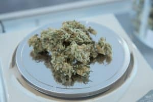 Colorado Allows Patients To Use Marijuana Instead Of Opioids
