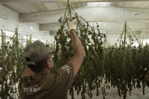 Marijuana jobs by city. Cannabis jobs.