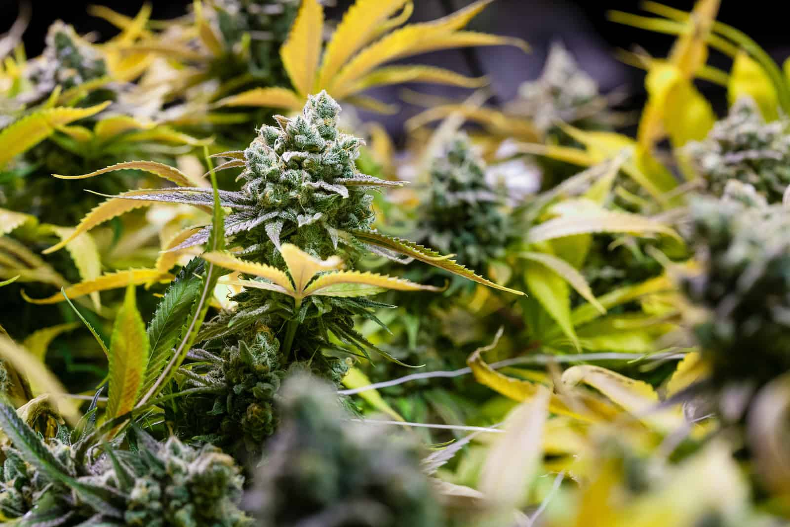 Vacant Massachusetts Mill Is Now Home To A Vibrant Pot Business