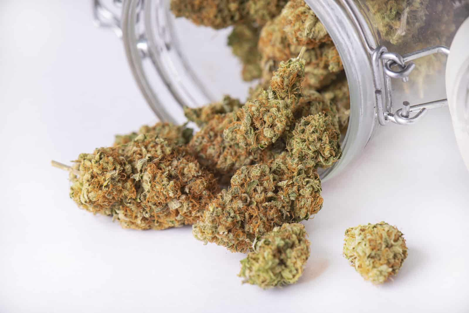 An In-Depth Look At The Cherry Pie Cannabis Strain. Marijuana buds