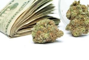 Cannabis salaries. Marijuana money