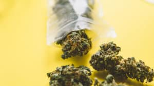 How to begin a dispensary in California. Marijuana buds