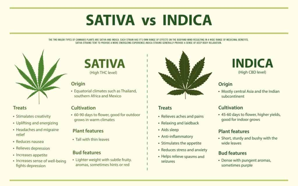 The Ultimate Guide to the Difference Between Indica vs. Sativa
