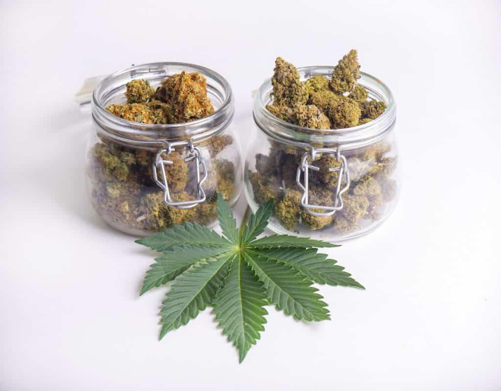 Curaleaf Marijuana Dispensaries Florida. 2 glass jars with marijuana buds and marijuana leaf.
