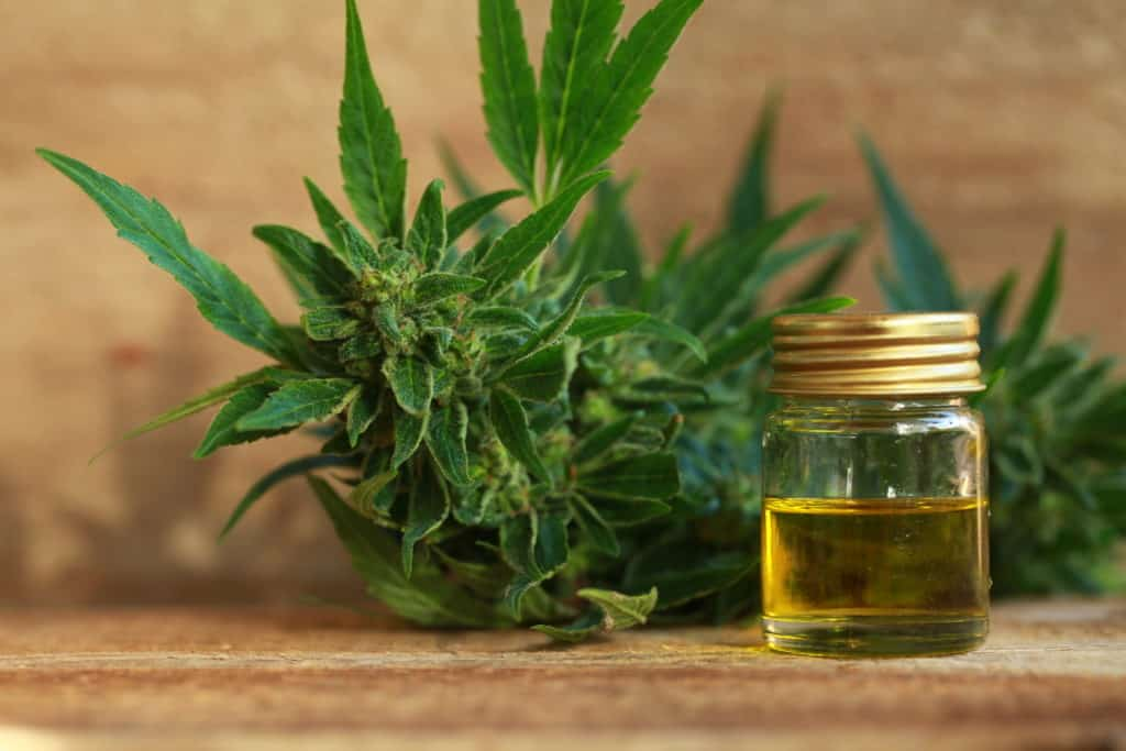 Top Benefits Of Cannabis Use. Oil in a jar and marijuana plant.