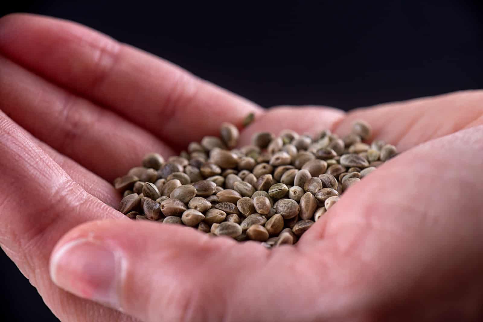 Marijauna Seed Banks That Ship to USA. Seeds in a palm.