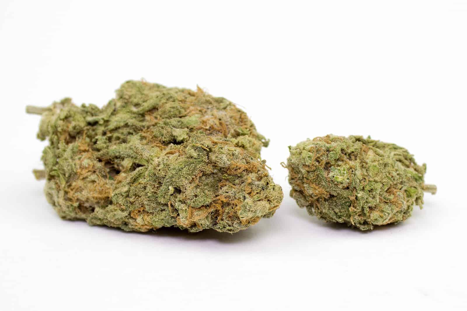 Master Kush Strain Guide. Marijuana buds up close.