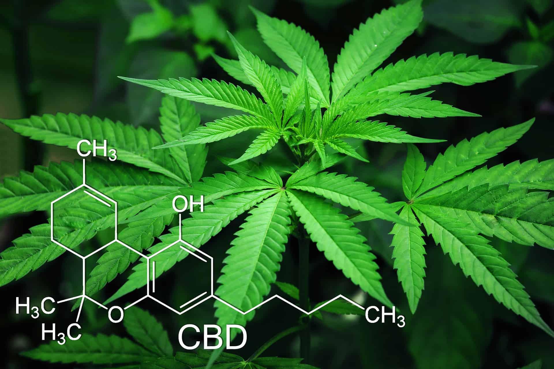 Marijuana for autoimmune disease treatment. Cannabis plant with molecules.