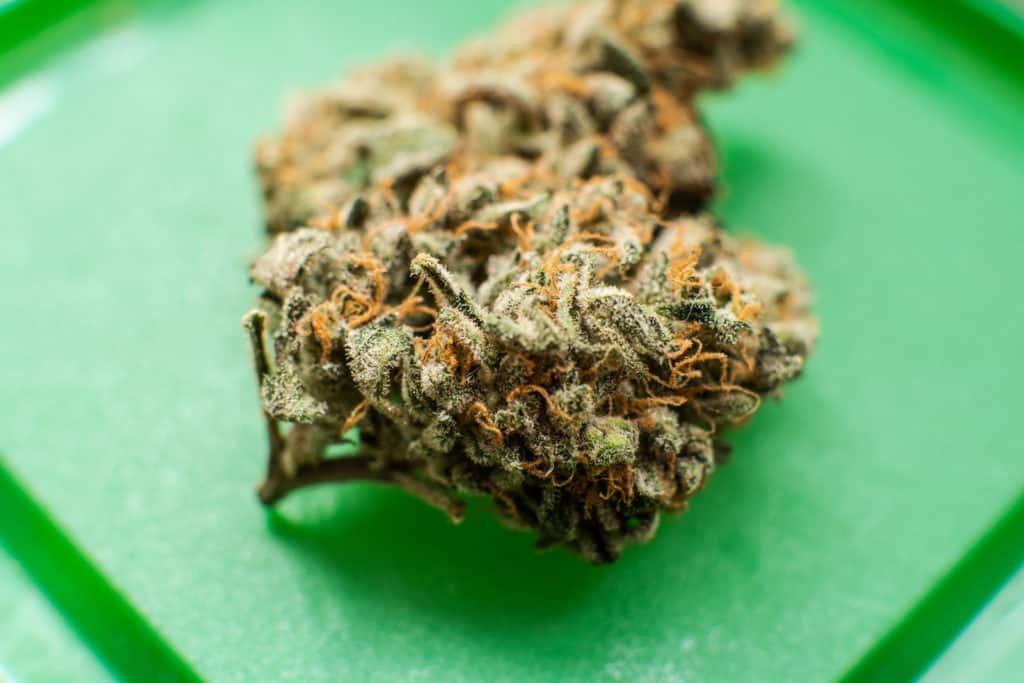 Is Cannabis Legal in Hawaii? Closeup of a cannabis bud.