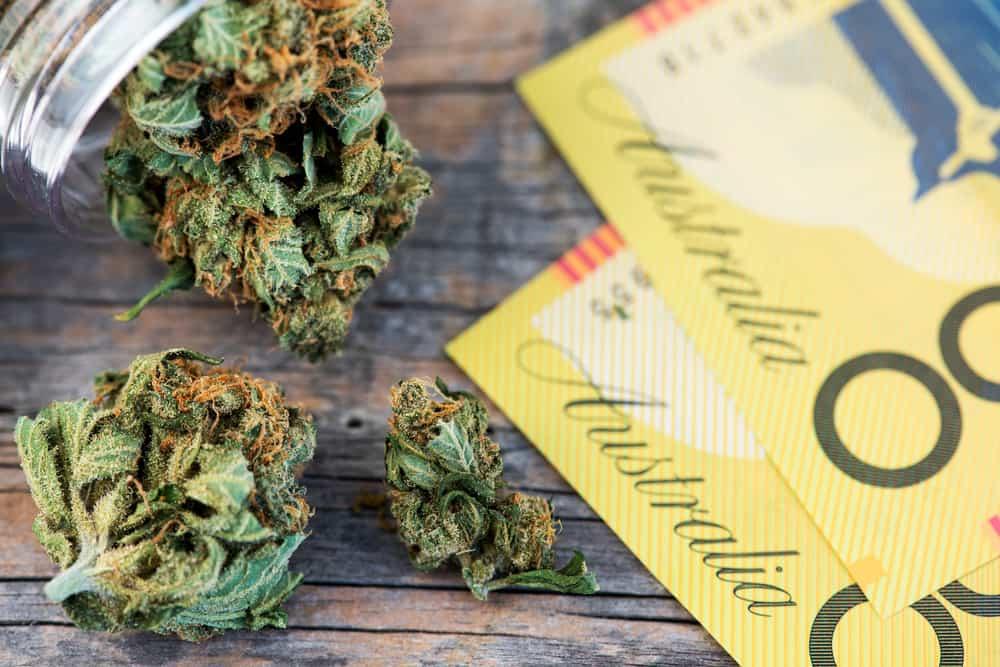 Australia Marijuana Jobs and Cannabis Careers