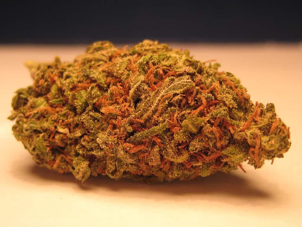 The Ultimate Green Crack Strain Guide. Marijuana bud.