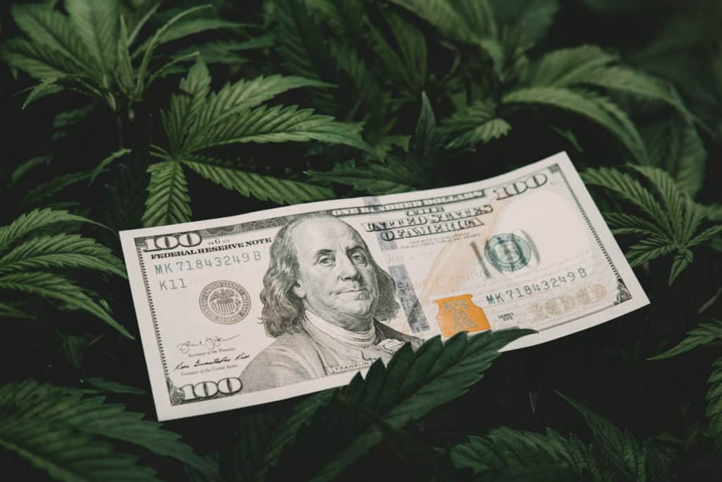 IRS Releases Tax Guidance for Marijuana Businesses. 100 dollar bill on a weed plant.