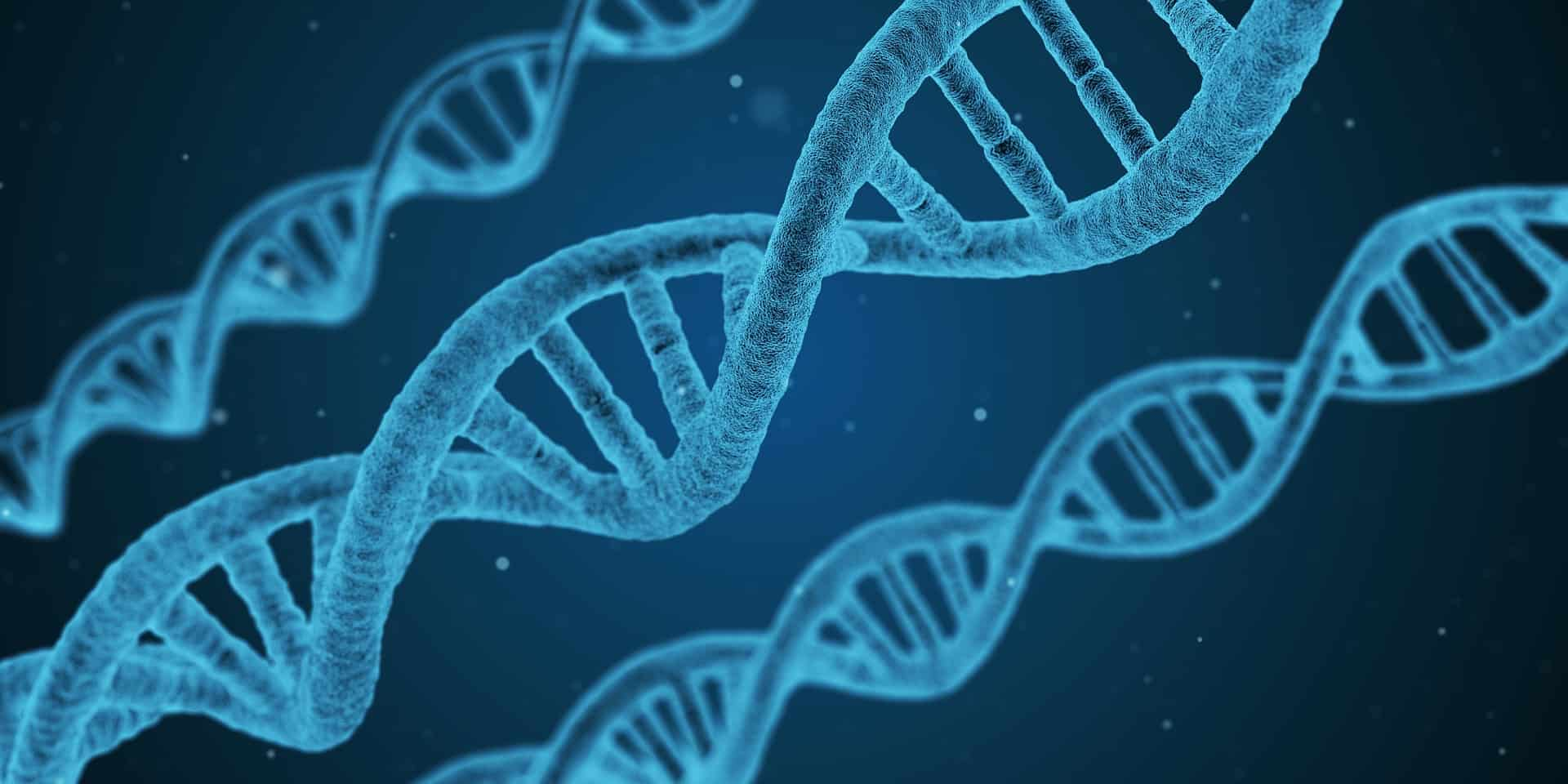 7 things to consider when choosing cannabis genetics