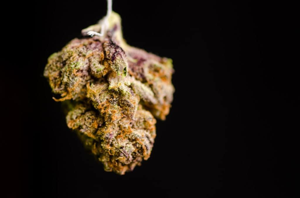 candyland strain review, marijuana bud on black surface