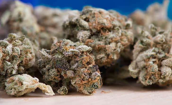 How To Grow Huge Cannabis Buds. Cannabis buds closeup.