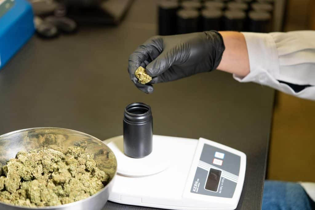 Legalized adult use cannabis being weighed by hand with black glove.
