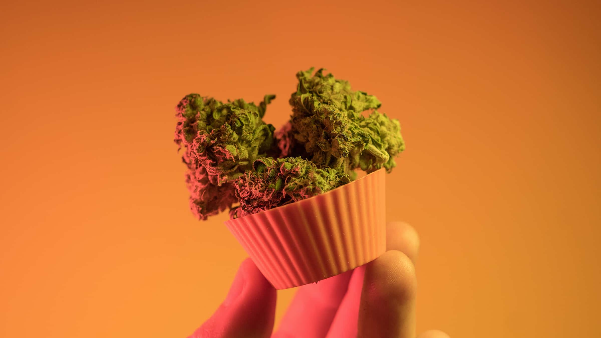 Cannabis edible being help by a hand with an orange background.