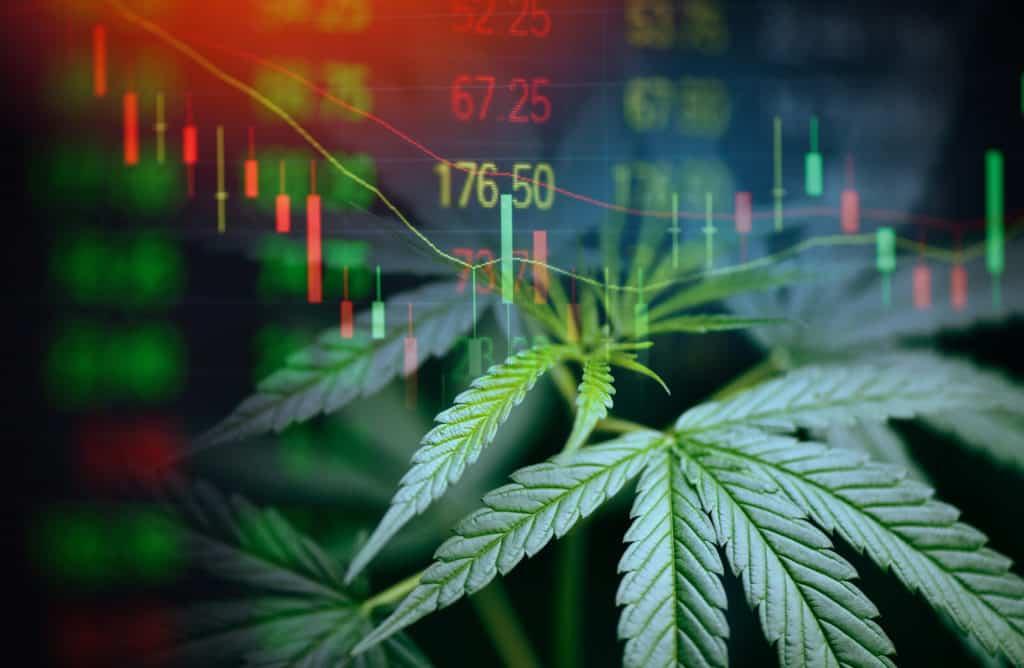 Top Marijuana Stocks for December 2020. Computer screen with marijuana leaves.