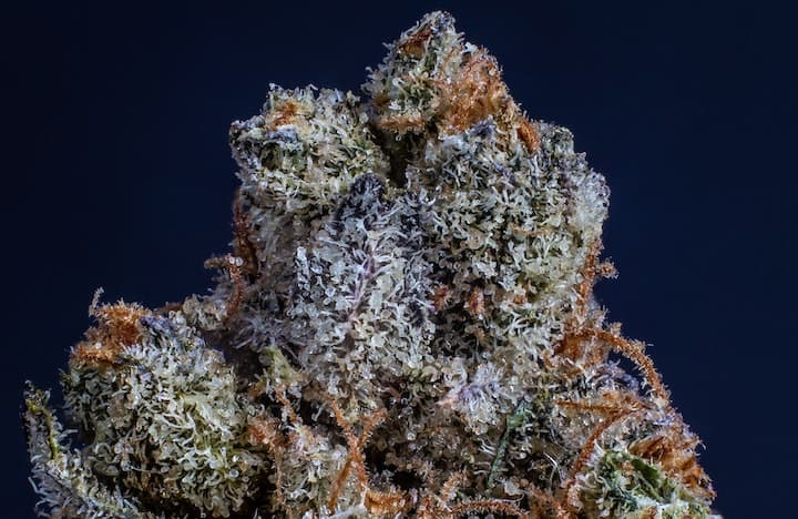 Up close of the strain Chiesel with a black background.