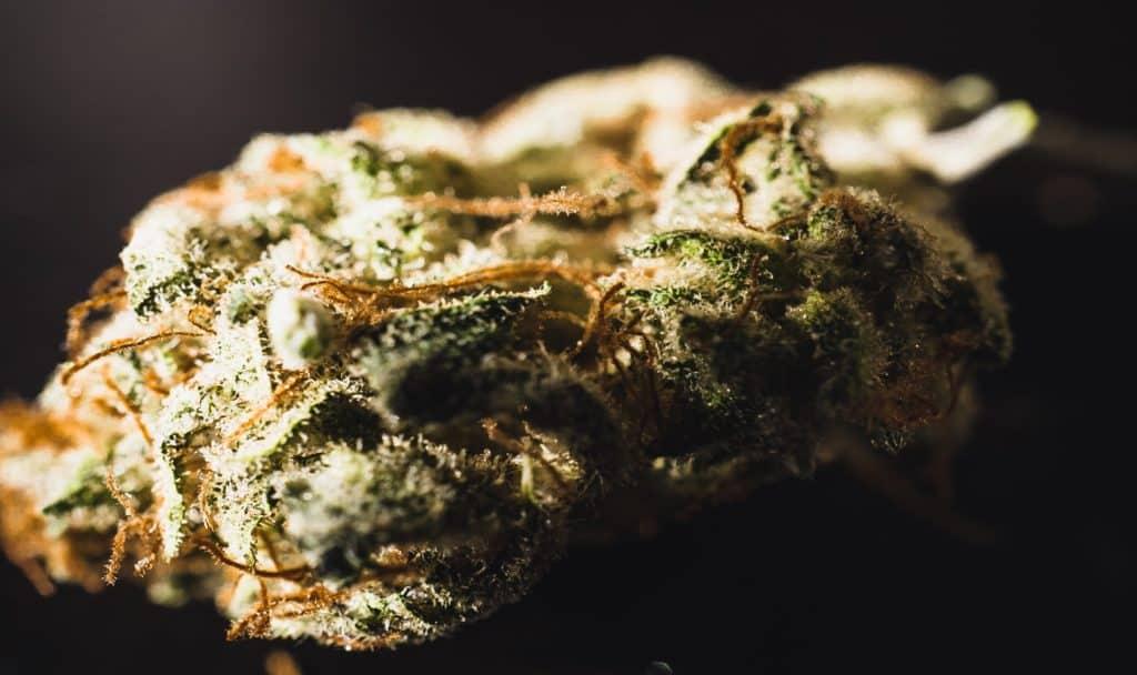 Close up of the Alien OG cannabis strain