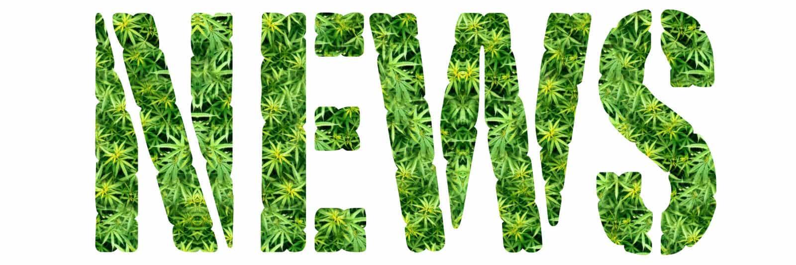 Marijuana News Recap for December 2020