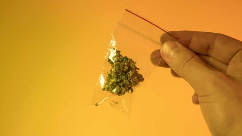 Stardawg Strain in a plastic baggy.