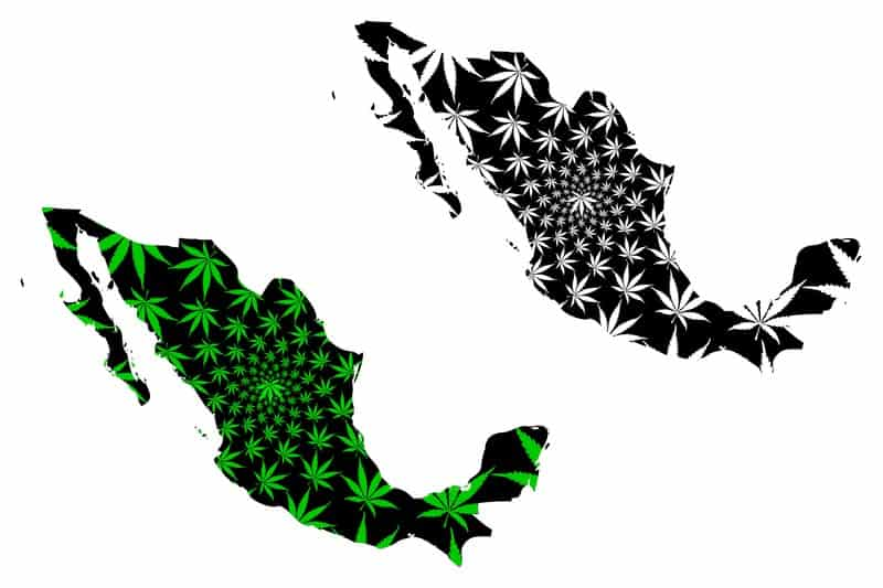 Mexico shape in cannabis. Mexico legalizing cannabis