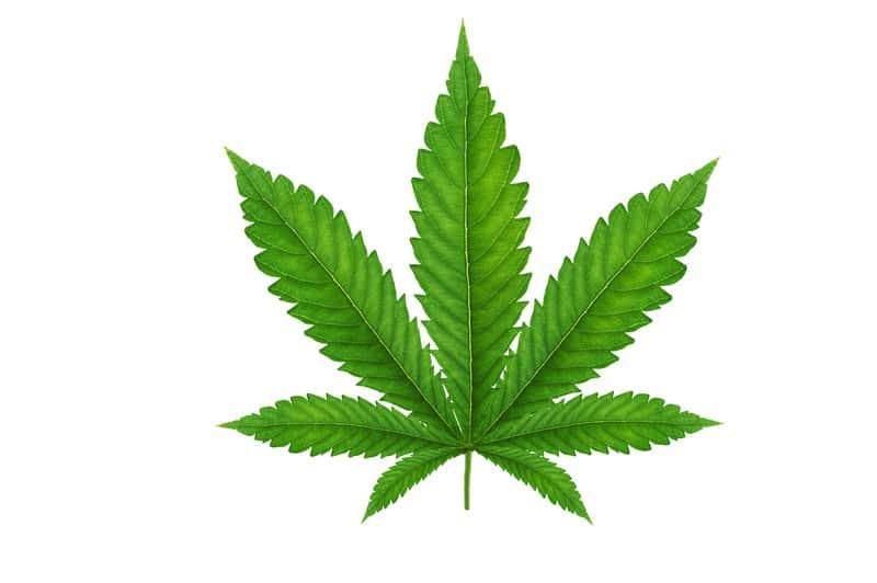 cannabis leaf, CBD hemp direct