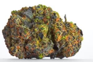 close up of big bud strain on white background