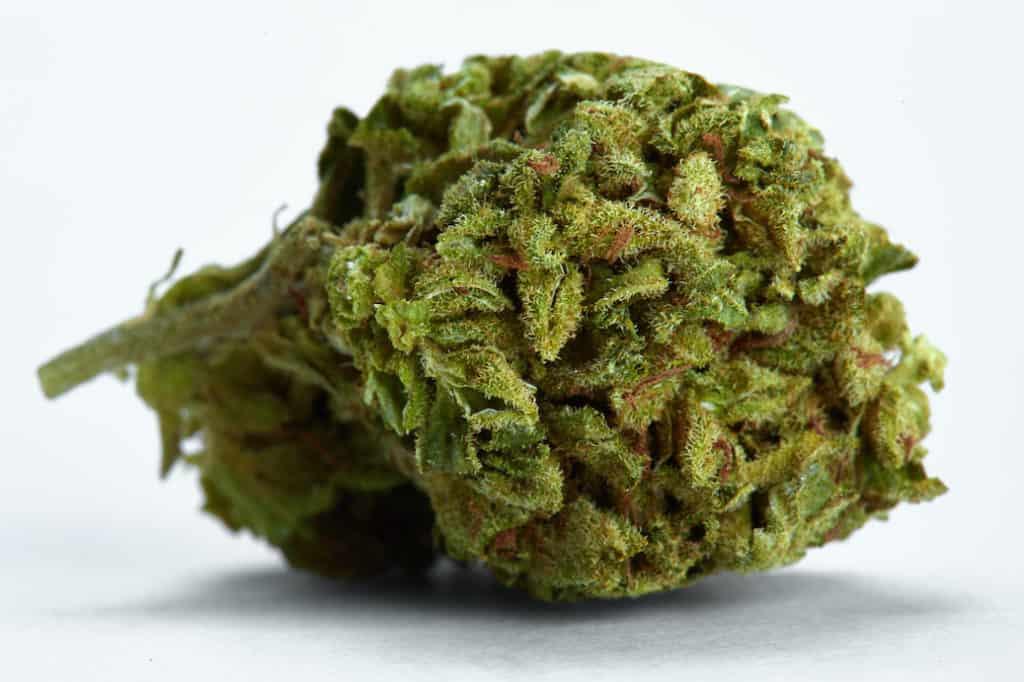 close up of CBD kush strain on white