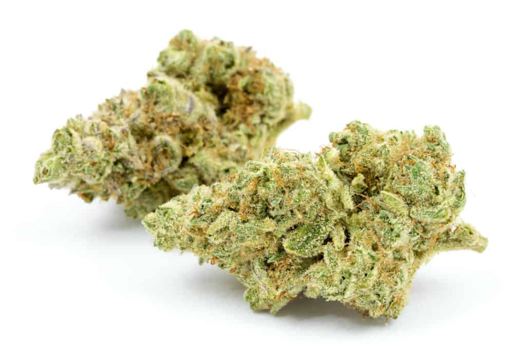 citrique strain bud on white background