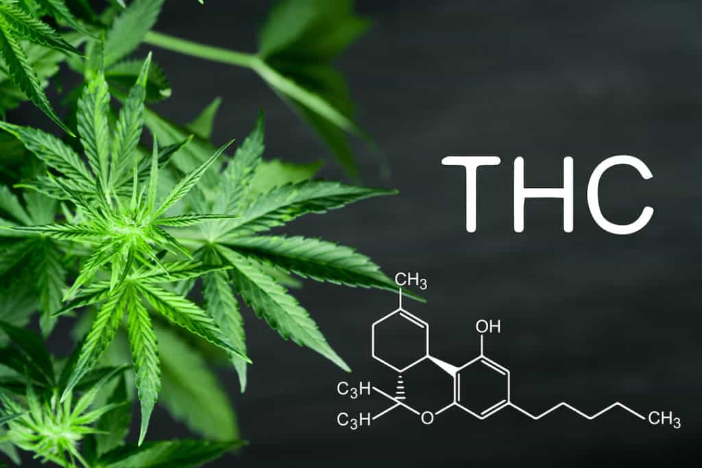 THC Percentage with cannabis leaves