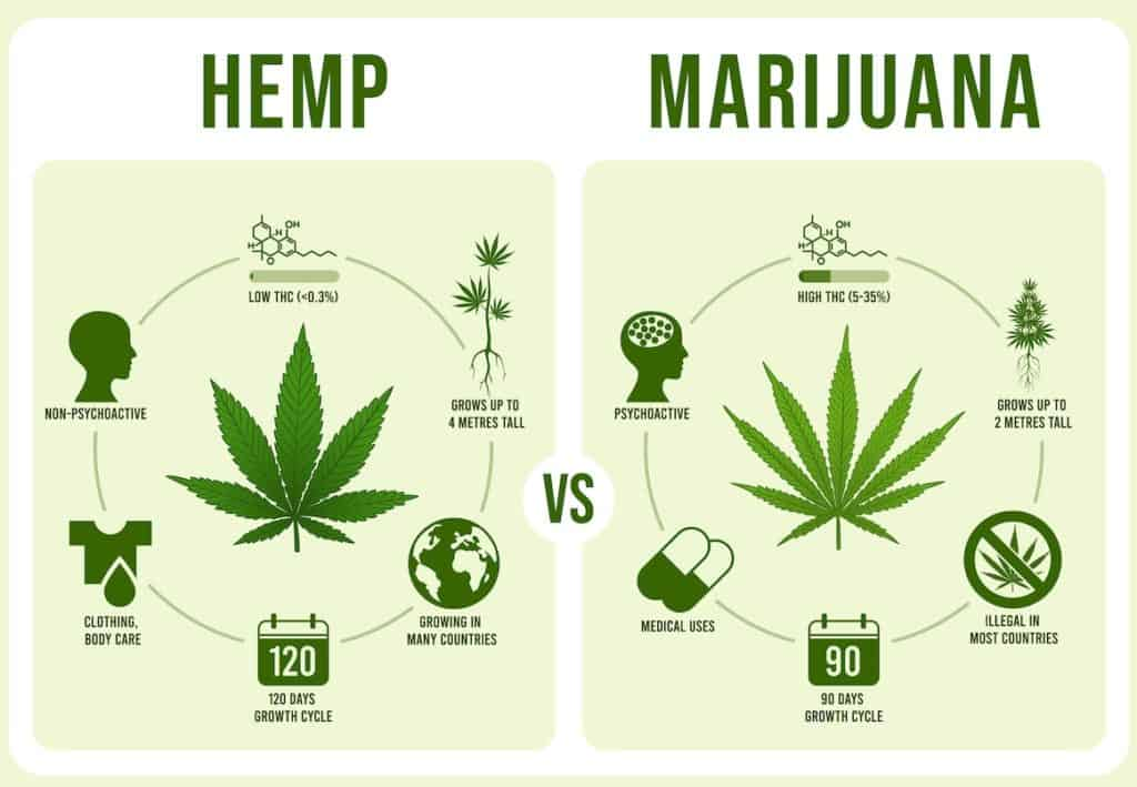 hemp vs marijuana infographics