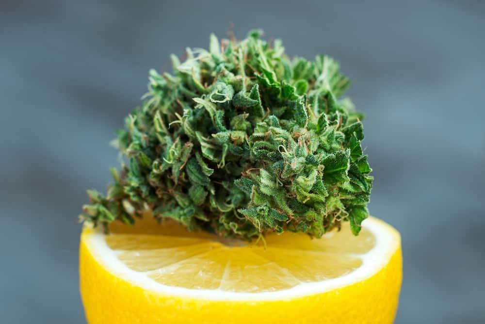 marijuana bud on lemon, lemon cookies strain
