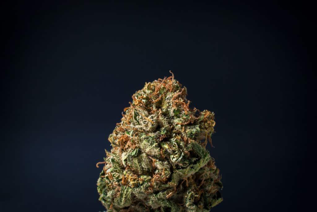 cannabis bug on dark blue background, blue flame strain