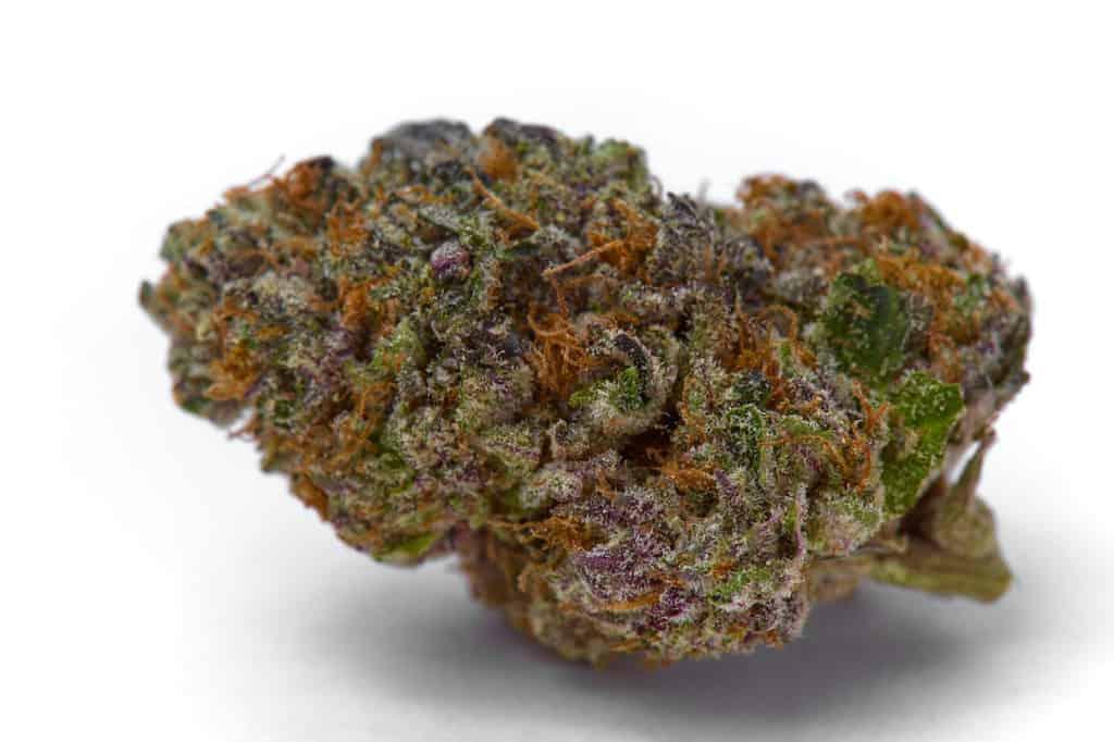 marijuana strain sticky flower bud isolated on a white background, bootylicious strain