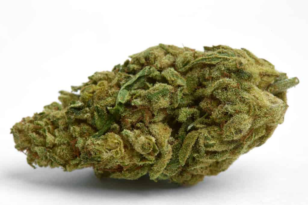 marijuana bud on white surface, cloud 9 strain
