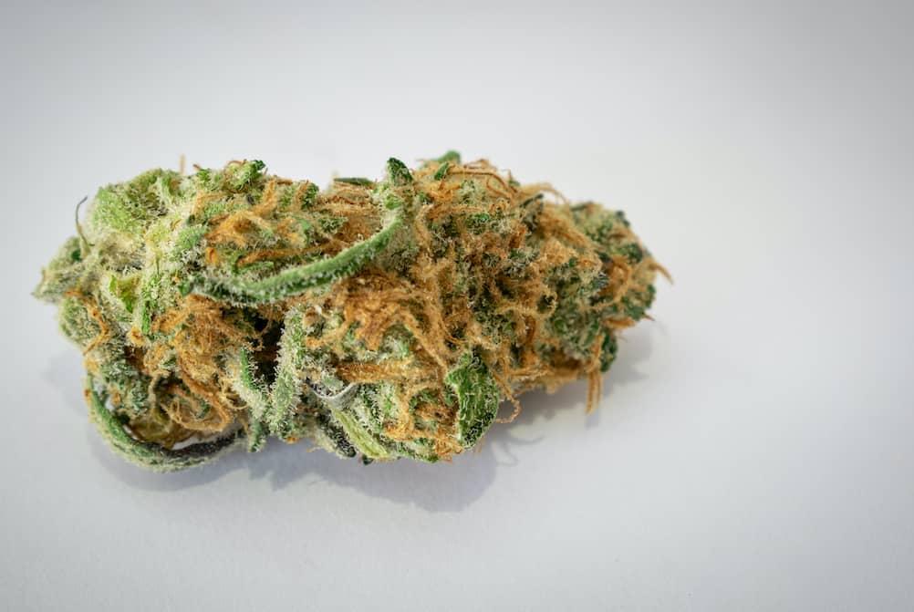 marijuana strain on white surface, cluster funk strain