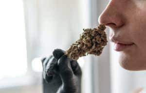 women smelling a marijuana bud, dog walker og strain