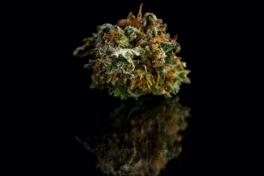 close up of a cut and trimmed bud of marijuana on a black reflective surface, Mac 1 strain