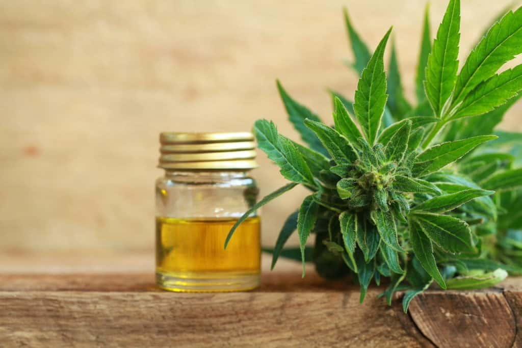 cbd oil in container next to marijuana plant, terpenes in CBD oil