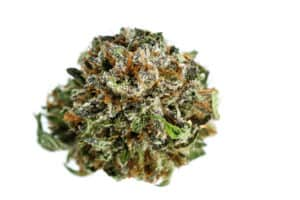 cannabis bud trimmed isolated on white, white knuckles strain