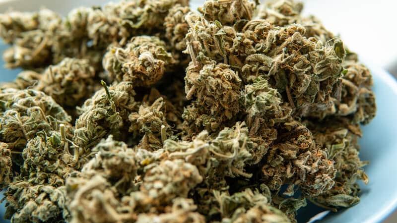 marijuana buds in a bowl, Balla berries strain