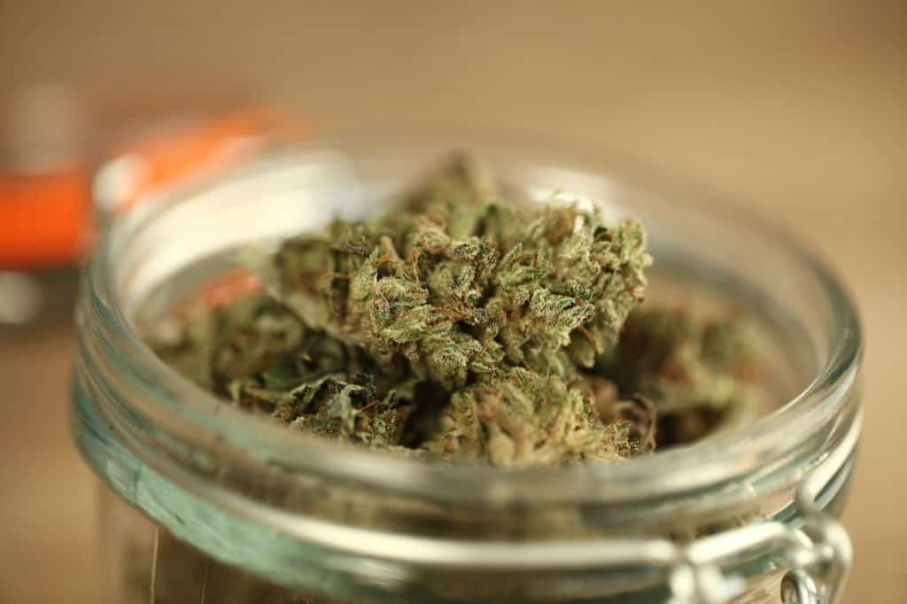 medical cannabis marijuana in a glass jar, fatso strain