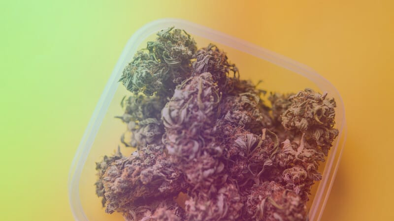 marijuana buds in a plastic container on white surface, rainbow sherbet strain