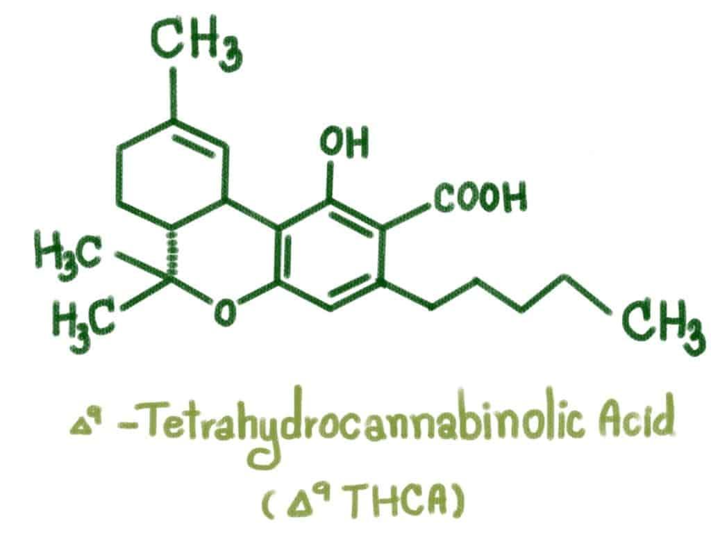 Structure of delta-9-Tetrahydrocannabinolic acid, thca vs thc