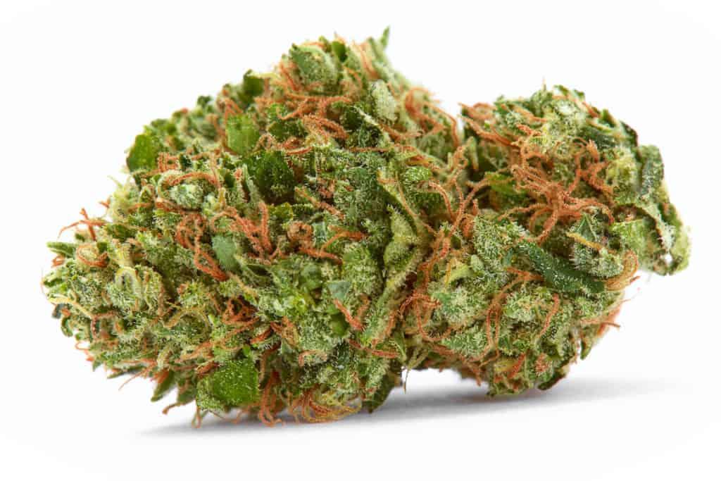 Close up of prescription medical marijuana strain flower on white background, white gushers strain