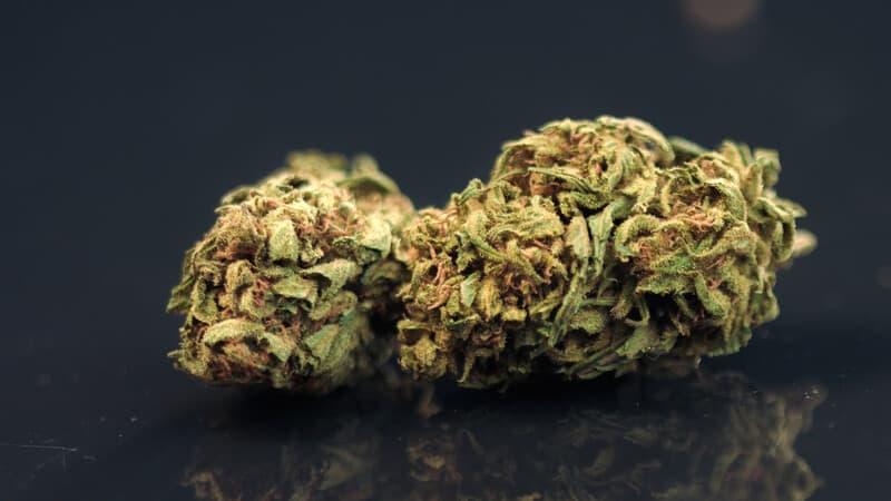 cannabis buds on dark surface, g wagon strain
