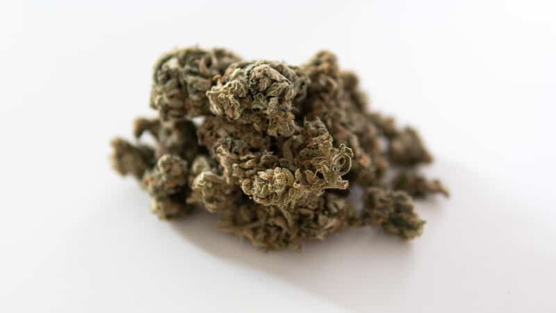 marijuana bud on isolated white, brownies scout strain