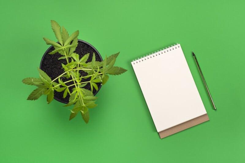 marijuana plant next to notebook on green background, Florida marijuana college